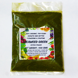 Seaweed extract for plant
