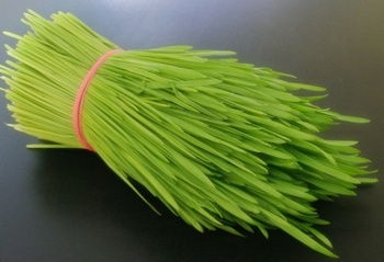 Addy Wheatgrass Fresh