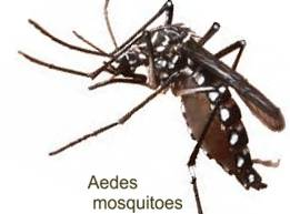 Ades Mosquito spreads Dengue Fever