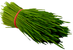 Addy Fresh Wheatgrass