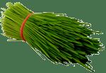 Addy Fresh Wheatgrass